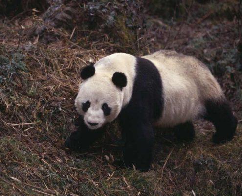 جاذبه های گردشگری در تور چین