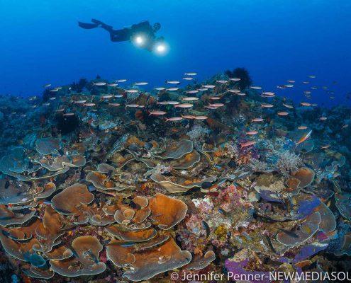 جاذبه های گردشگری در تور اندونزی
